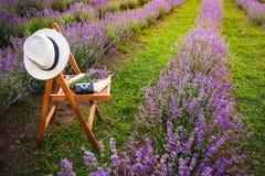 Стул с повешенный над шляпой, открытой книгой, ретро камерой и пуком лаванды цветет между зацветая ООН строк лаванды Стоковое Фото
