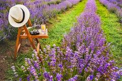 Стул с повешенный над шляпой, открытой книгой, ретро камерой и пуком лаванды цветет между зацветая ООН строк лаванды Стоковые Изображения