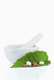 Ступка и пестик с пилюльками на листьях Стоковые Изображения