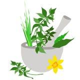 Ступка и пестик иллюстрация штока