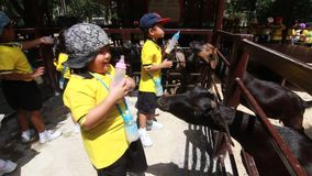 Студенты детского сада посещают зоопарк акции видеоматериалы