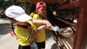 Студенты детского сада посещают зоопарк сток-видео