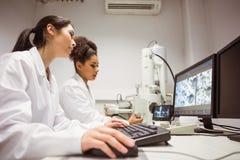 Студенты науки смотря микроскопическое изображение на компьютере Стоковые Фото