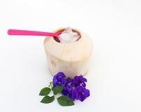 Студень кокоса и розовая ложка Стоковые Фотографии RF