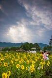 Студии свадьбы в полях солнцецвета Стоковая Фотография