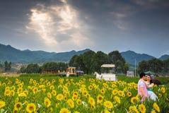 Студии свадьбы в полях солнцецвета Стоковые Фото