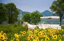 Студии свадьбы в полях солнцецвета Стоковое Изображение RF