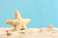 Студия снятая морской звёзды в песке стоковое изображение rf