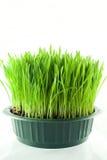 Пшеница Кристмас Стоковые Фотографии RF