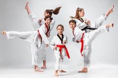 Студия сняла группы в составе дети тренируя боевые искусства карате Стоковое Изображение
