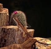 коричневая ящерица Стоковое Фото