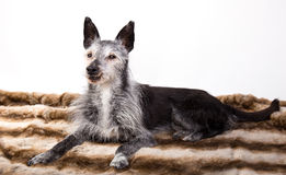 Студи-портрет старой собаки Стоковое Изображение