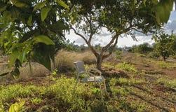 стул одиночный Стоковые Фото