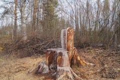 Стул пня в лесе Стоковая Фотография
