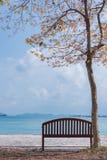Стул под деревом на взморье Стоковые Изображения RF