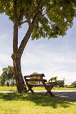 Стул под деревом Стоковая Фотография RF