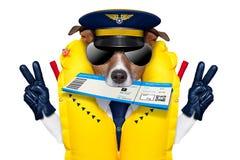 Стюардесса летчика авиалинии проверяет внутри билет Стоковое Фото