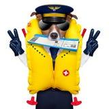 Стюардесса летчика авиалинии проверяет внутри билет стоковые изображения rf