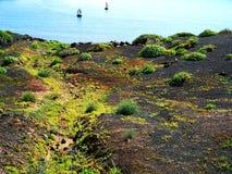 Субтропическая растительность стоковое фото rf