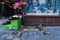 Сувенирный магазин на портовом районе Стоковое Изображение