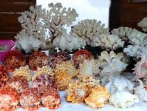 Сувенир Seashell ручной работы в витрине стоковое изображение