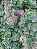 Суккулентный сад стоковое фото