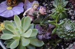 Суккулентный Fairy сад стоковые фотографии rf