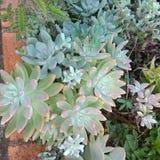 Суккулентный сад Стоковое фото RF