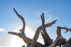 Сук и голубое небо стоковое изображение rf