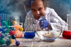 Сумасшедший ученый счастливо смотря его мышь лаборатории стоковые изображения rf