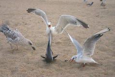 сумашедшая чайка Стоковое Изображение