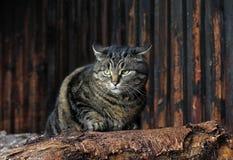 Сумашедший кот Стоковые Фото