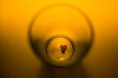 Сумеречница в стекле с лучем концепции света Стоковое фото RF