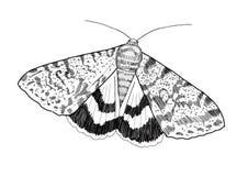 Сумеречница - цифровой чертеж - Catocala Стоковая Фотография