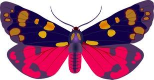 сумеречница callimorpha Иллюстрация штока