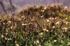 Сумеречницы на траве (художнический обрабатывать) Стоковое Изображение
