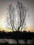 Сумерк дерева в природе Стоковые Изображения