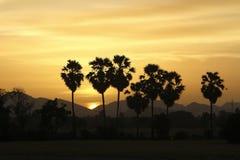 Сумерк, дерево Стоковые Изображения RF
