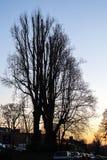 Сумерк зимы в Лондоне Стоковые Изображения