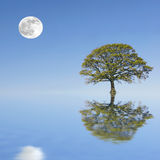 сумерк лета красотки Стоковые Фотографии RF