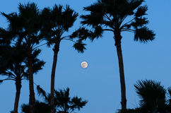 Сумерк с силуэтом полнолуния и пальмы Стоковое Фото