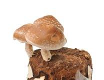 Сумка гриба на белой предпосылке Стоковые Изображения