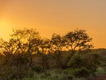 Сумрак в африканском Буше Стоковая Фотография RF