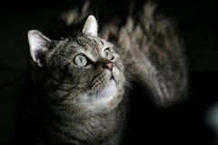 сумрак кота вниз стоковые фото
