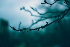 Сумрак после дождя стоковое фото rf
