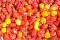 Супер горячие шотландские chilis Bonnet Стоковое Фото