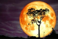 супер дерево силуэта задней части луны полной крови и красочное небо иллюстрация штока