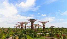 Супер деревья в садах заливом Сингапуром Стоковая Фотография