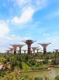 Супер деревья в садах заливом Сингапуром Стоковые Фотографии RF