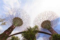 Супер деревья в садах заливом Сингапуром Стоковые Изображения